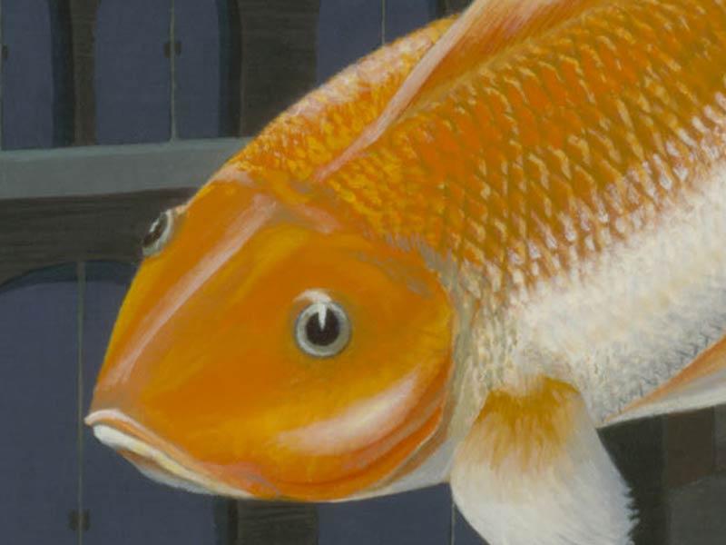 Detail Goldfish